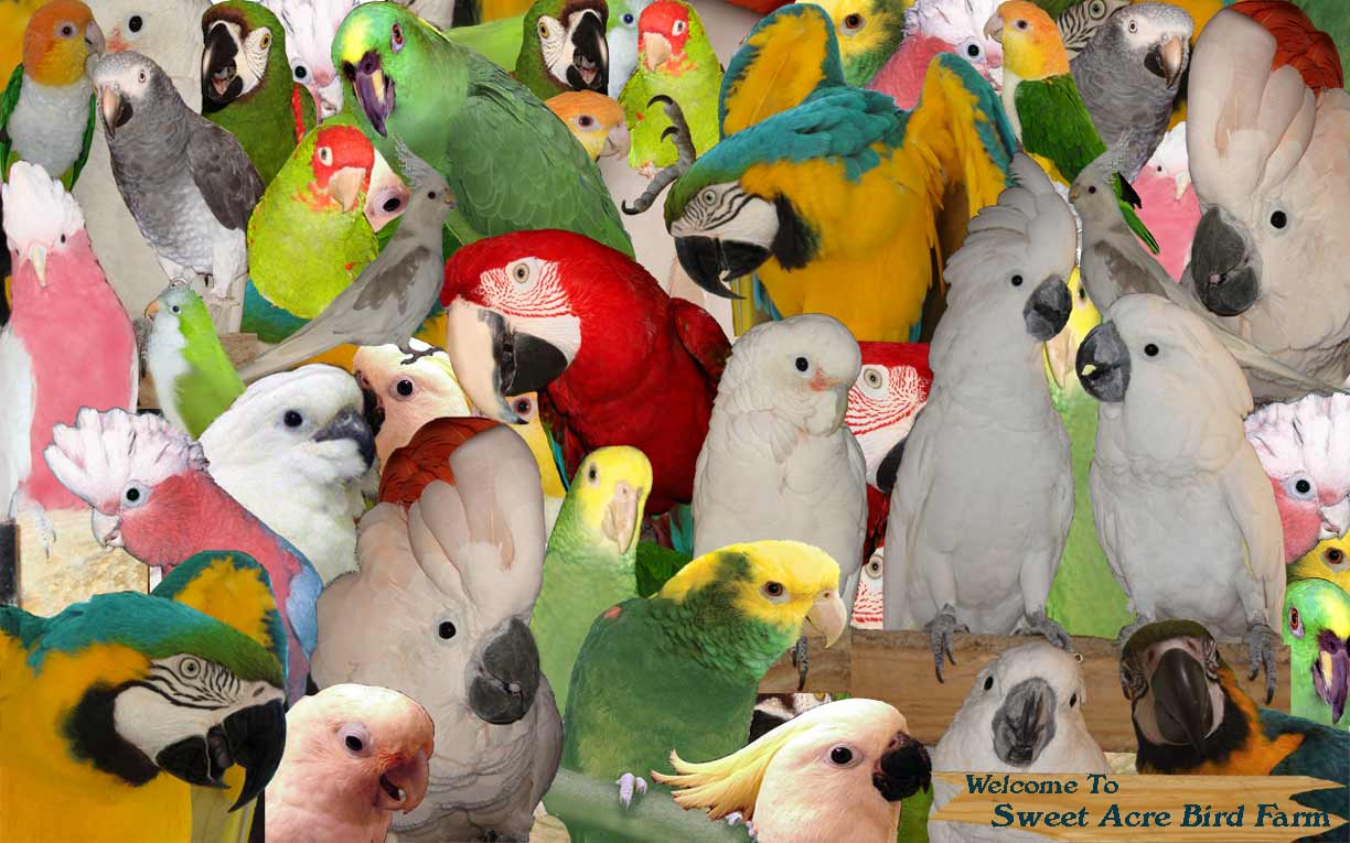 Various Species Of Exotic Hookbill Type Parrots